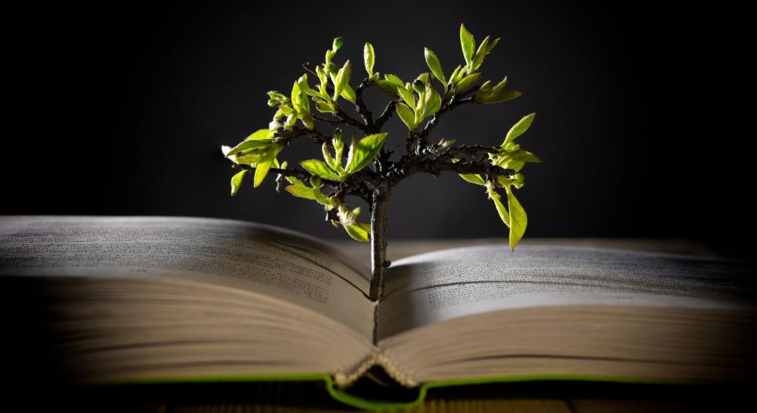 Bog og træ